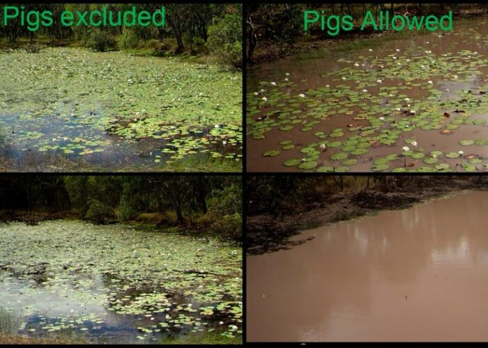 comparison of four lagoons