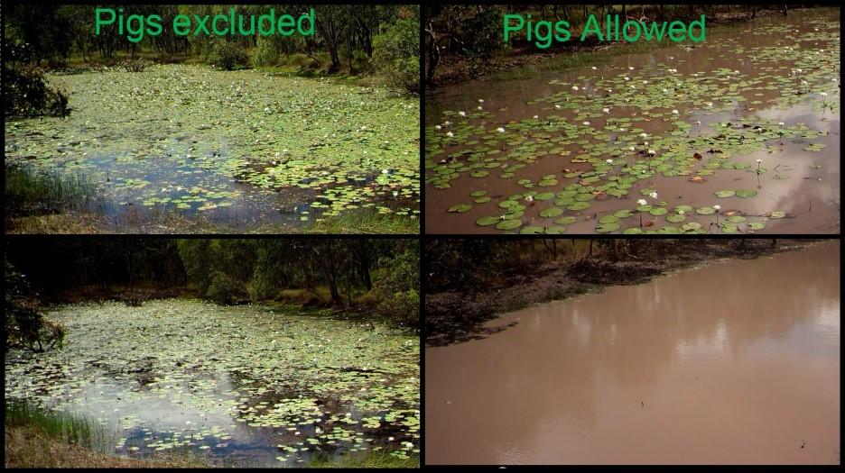 comparison of four lagoons