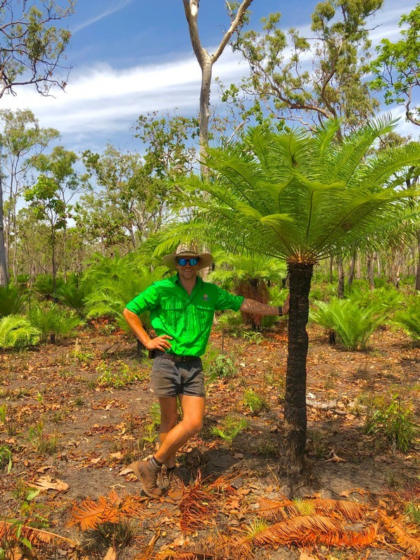 Rossy the Guide Next to cycad