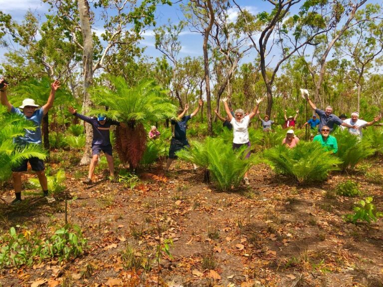 A cycad forest in Cape York