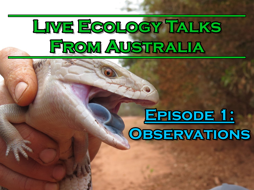 Blue Tongue Lizard with text headings