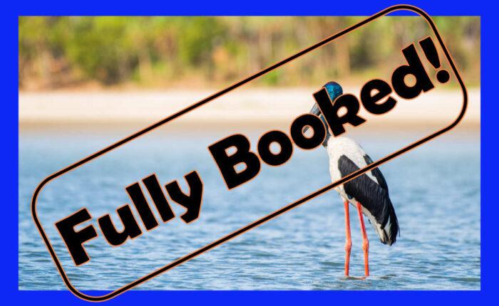 black necked stork in water